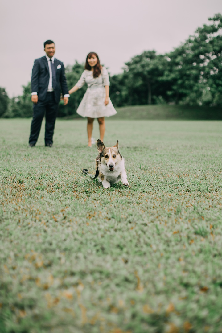 huiwen-postwedding-with-pet-corgi-26