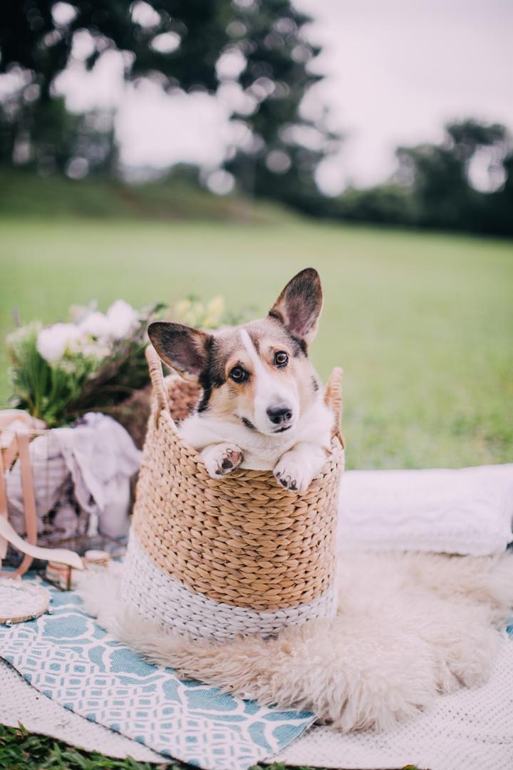 huiwen-postwedding-with-pet-corgi-8