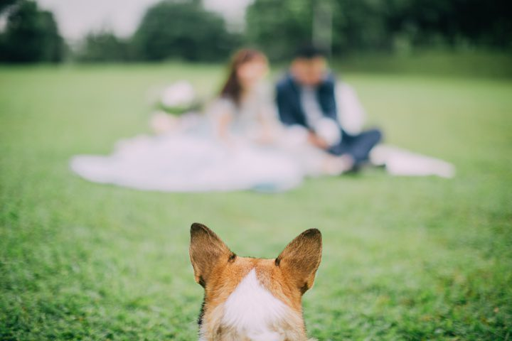 huiwen-postwedding-with-pet-corgi-2