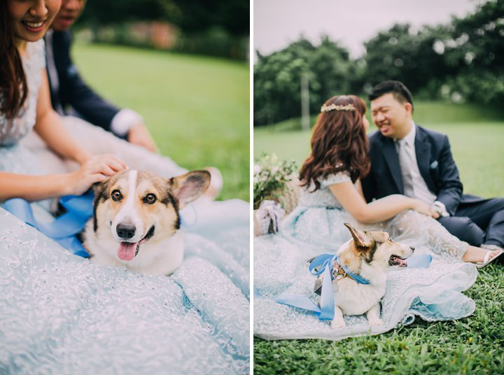 huiwen-postwedding-with-pet-corgi-4
