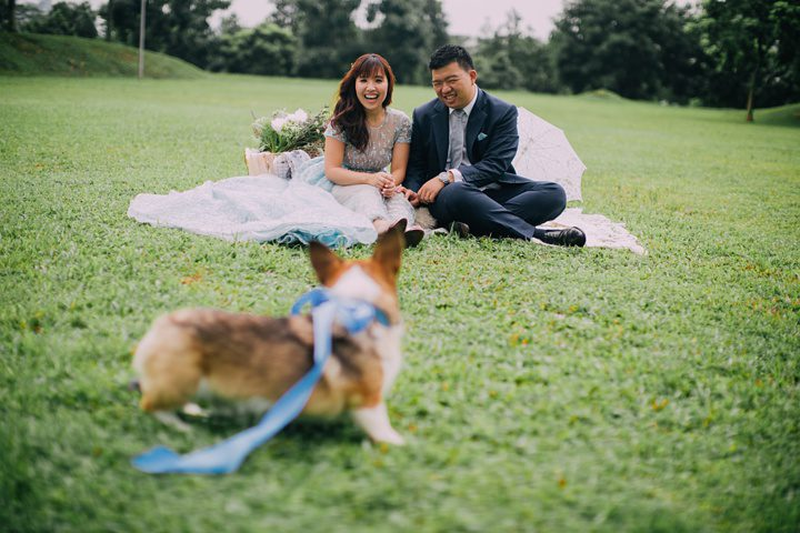huiwen-postwedding-with-pet-corgi-6